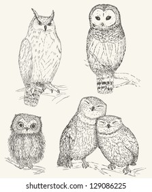 Owl collection. Set of funny bird