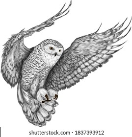 owl in flight Northern black white vector illustration