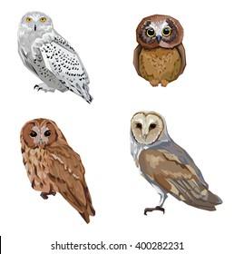 owl illustration birds, set vector owl