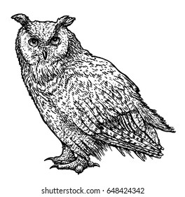 Owl illustration, drawing, engraving, ink, line art, vector