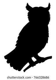 owl, motive of forest, animals, wildlife