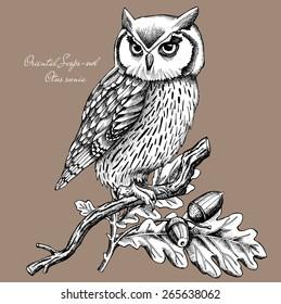 Owl on a branch, Oriental Scops-owl, Otus sunia, Brown