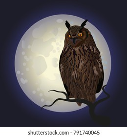 Owl on tree at midnight with full moon background. Vector illustration