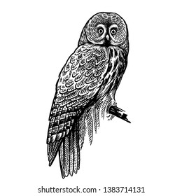 Owl. Realistic bird isolated on white background. Vector illustration. Predatory forest bird. Sketch hand drawing. Black and white. Vintage.