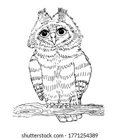 An owl sits on a tree branch. Drawing by liner. Isolated on a white background. Illustration of an owl for paintings, posters, designs, prints. Long-eared Owl Chick. Drawn by hand. Vector.