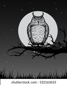 Owl is sitting on the branch in the night.Vector illustration