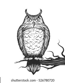 Owl is sitting on the branch.Vector illustration