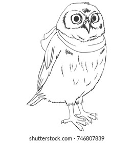 owl sketch, vector, illustration