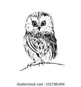 Owl vintage illustration, engraved retro style, hand drawn, sketch - Vector