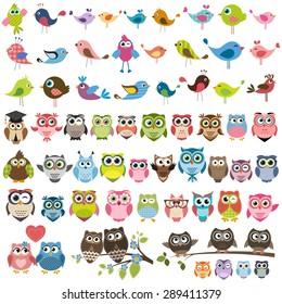 owls and birds set