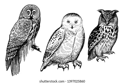 Owls. Realistic birds isolated on white background set. Vector illustration. Predatory forest birds. Sketch hand drawing. Black and white. Vintage engraving.