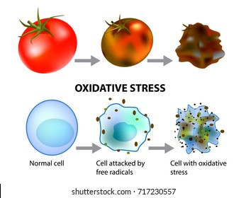 Oxidative stress and cellular aging. Free Radicals