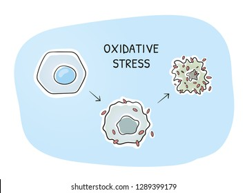 Oxidative stress and cellular aging. A healthy cell beeing an attack by free radicals. Hand drawn cartoon sketch vector illustration, marker style coloring.
