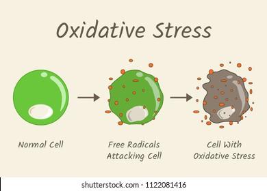 Oxidative Stress Diagram. Free radicals attacking cell. Vector illustration flat design