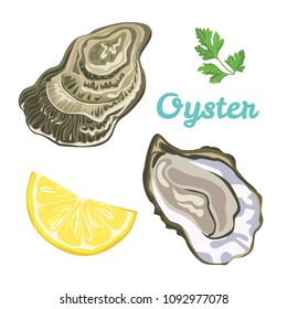 Oyster isolated on white background. Vector illustration of raw clam in shell in simple flat style. Seafood menu.