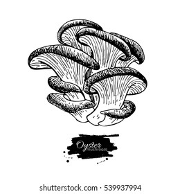 Oyster mushroom hand drawn vector illustration. Sketch food drawing isolated on white background. Organic vegetarian product. Great  for menu, label, product packaging, recipe