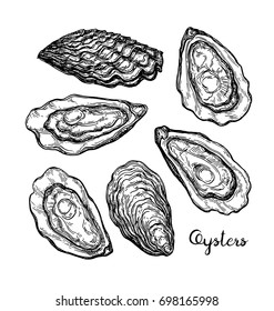 Oysters ink sketch. Isolated on white background. Hand drawn vector illustration. Retro style.