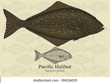Pacific Halibut. Vector illustration with refined details and optimized stroke that allows the image to be used in small sizes (in packaging design, decoration, educational graphics, etc.)