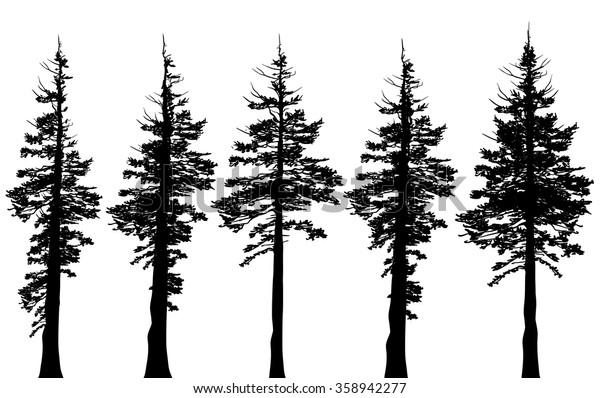 Vintergröna träd