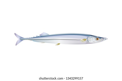 Pacific saury fish isolated on light background. Fresh fish in a simple flat style. Vector for design seafood packaging and market illustration. EPS10. Marine life or water nature.