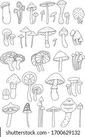 Pack of mushroom illustrations. Hand drawn fungi.