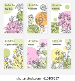 Package templates for herbal tea, fresh  modern design of cards with botanical sketch of medicinal herbs and flowers,vector collection, dog rose, calendula, st john's wort, clover, chamomile,valeriana