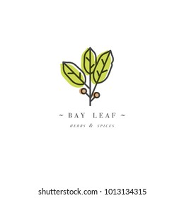 Packaging design template logo and emblem - herb and spice - bay leaf. Logo in trendy linear style