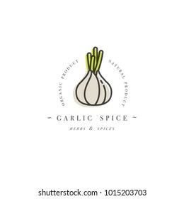Packaging design template logo and emblem - herb and spice - garlic head. Logo in trendy linear style