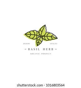 Packaging design template logo and emblem - herb and spice - basil branch. Logo in trendy linear style