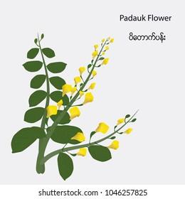 Padauk Flowers(The National Flower of Myanmar)