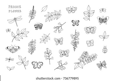 Padauk national flower of Myanmar with butterflies cartoon doodle vector illustrations set