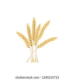 paddy rice barley malt wheat isolated