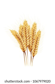 paddy rice barley wheat oats seed isolated white background