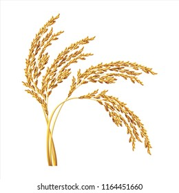paddy rice malt barley oats isolated