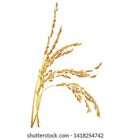 Paddy rice malt barley oats wheat grain isolated