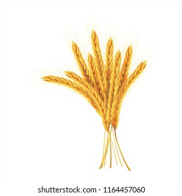 paddy rice malt barley wheat field oats seeds weeds isolated