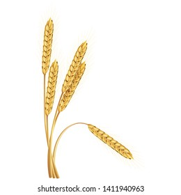Paddy rice malt barley wheat oats golden color isolated design