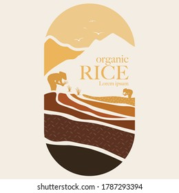 paddy rice premium organic natural product banner logo vector design