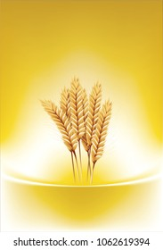 paddy rice wheat barley oats seed isolated gold abstract background
