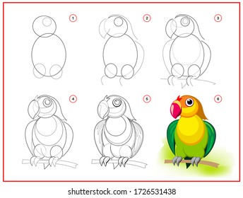 Page shows how to learn to draw step by step cute little green parrot. Developing children skills for drawing and coloring. Printable worksheet for kids school exercise book. Flat vector illustration