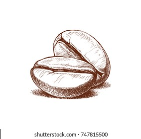 painted coffee beans, sketch, vector drawing, perfect ingredient, choice grain