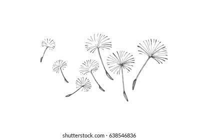 Painted flying dandelion seeds, vector image