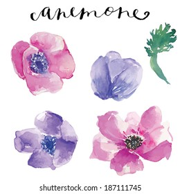 Painted Watercolor Anemone Flowers Vector