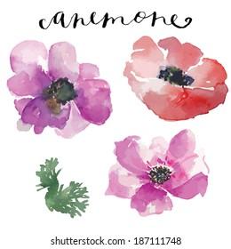 Painted Watercolor Vector Flowers Anemones