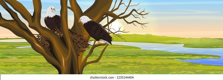 A pair of bald eagle birds in a nest of branches. River Valley. Animals of North America. Realistic Vector Landscape