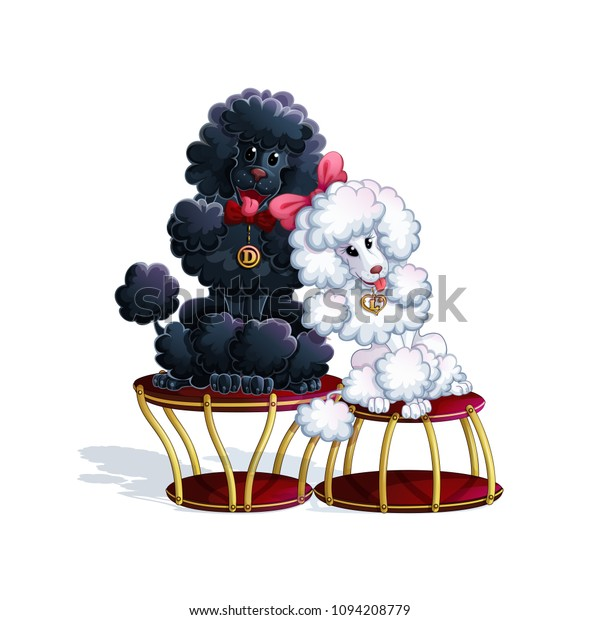 Pair Circus Poodles Black Boy White Stock Vector (Royalty Free