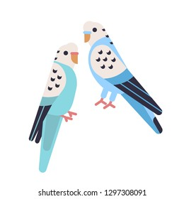 Pair of cute budgerigars isolated on white backgro. Domesticated budgies. Funny parakeets. Exotic tropical birds. Adorable domestic animals or pets. Vector illustration in flat cartoon style.