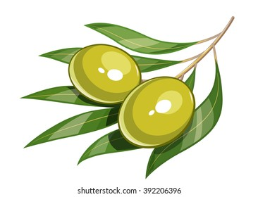 Pair of green olive vector illustration. Isolated white background. Transparent objects used for lights and shadows drawing