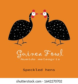 A pair of Guinea Fowl, facing each other, on orange color background.  Lettering: Guinea Fowl, Numida meleagris, speckled hens. Unexpected Vector Illustration for cards, prints, textile and t-shirts.