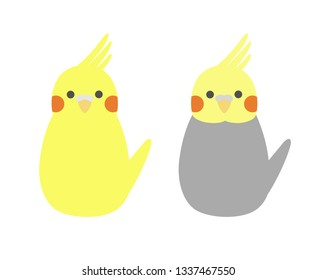 Pair of small simple parrot. Cute colorful cockatiels. Vector illustration.